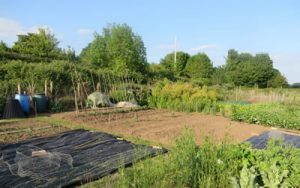 Picture of the allotments 2